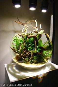 Planted Aquarium, Aquarium Garden, Mini Aquarium, Aquarium Landscape, Live Aquarium Plants, Aquascaping, Betta Fish Bowl, Betta Fish Care, Aquarium Driftwood