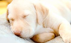 30+Of+The+Most+Adorable+Puppy+GIFs+We've+Ever+Seen++#refinery29+http://www.refinery29.com/2016/03/106296/cute-puppies-puppy-pictures#slide-10