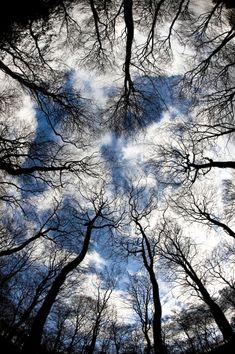 Trees by =pnewbery on deviantART