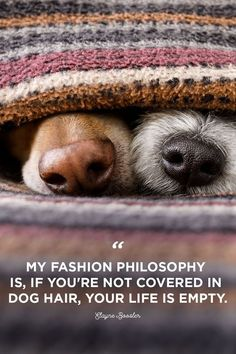 30 Dog Quotes That Will Melt Your Heart 30 Cute Dog Love Quotes - Puppy Sayings and Dog Best Friend Quotes Cute Love Quotes, Life Quotes Love, House Quotes, Sweet Quotes, Sweet Sayings, Amazing Quotes, Cute Puppies, Cute Dogs, Dogs And Puppies