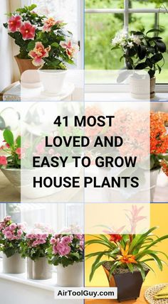 41 Most Loved and Easy to Grow House Plants ( Will Interest You!) - Equipment Area 41 Most Loved and Easy to Grow House Plants ( Will Interest You! Common House Plants, Easy House Plants, House Plants Decor, Flowering House Plants, Potted Plants, Easy To Grow Houseplants, Household Plants, Inside Plants, Plant Guide