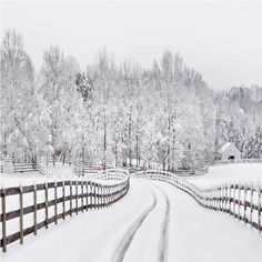 Winter Snow  Road Forest backdrop UK for Photo Booth ST-439 - 6.5'W*6.5'H(2*2m)