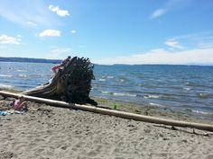 Summer Fun at Jetty Island, One of Puget Sound's Best Beaches - ParentMap
