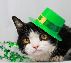 Grumpy Cat brother Pokey #GrumpyCat