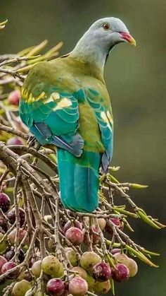 OHH !! - SO INCREDIBLY BEAUTIFUL!! - HIS COLOURING IS SIMPLY EXQUISITE!!