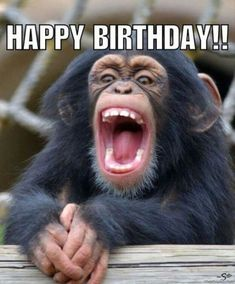 Happy birthday monkey - Funny Monkeys - Funny Monkeys meme - - Happy birthday monkey Monkeys Funny Happy birthday monkey The post Happy birthday monkey appeared first on Gag Dad. The post Happy birthday monkey appeared first on Gag Dad. Funny Happy Birthday Photos, Happy Birthday Frau, Happy Birthday For Him, Happy Birthday Messages, Happy Birthday Quotes, Funny Birthday, Happy Pics, Teacher Birthday, Happy Images