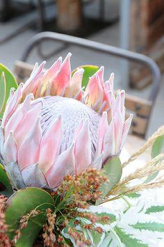 exotic flowers close up Flowers Nature, Exotic Flowers, Tropical Flowers, Beautiful Flowers, Pink Flowers, Protea Art, Protea Flower, Australian Native Flowers, Flower Close Up