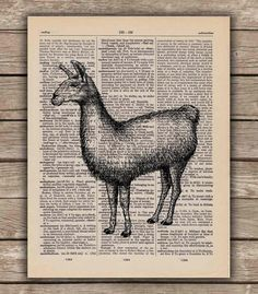 Llama on a Vintage Dictionary Book Page Art Print