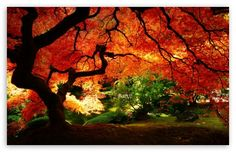 beautiful autumn pictures - Google Search
