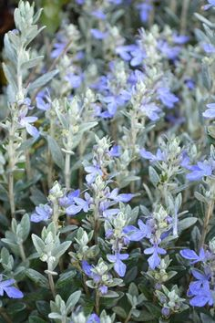 Plant Growers Australia Pty Ltd