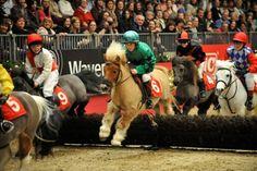 Miniature Horse Races WIth Kid Jockeys - Too CUTE!
