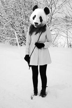 Pandascutum