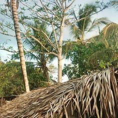 https://flic.kr/p/xGeSp3   Natural habitat.  #bomgosto #morros #maranhao #brazil #Brazil_Repost #Brasil #nordeste #nordestebrasileiro #palmeiras #palmtrees