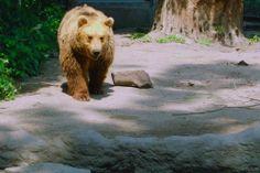 sziliphoto: Medve