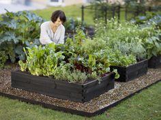 jardin potager en carré- quels légumes-racines et légumes-feuilles y planter