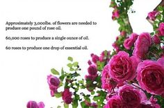 What Is Rose Attar?