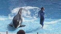 Texas lawmaker interested in killer whale SeaWorld legislation I'm feeling pretty good that captivity is going to cease real soon , as it should! :-)