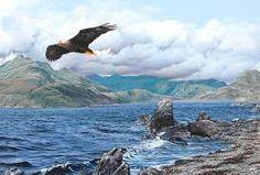 Bird of Prey Paintings by Alan M Hunt Bald Eagle Image result for alan m hunt Bald Eagle Images, British Wildlife, Birds Of Prey, Eagles, Hunting, Paintings, Artist, Animals, Animales