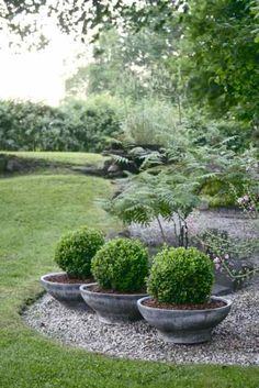 French Garden V Photograph by Wendy Uvino French Garden V Fine