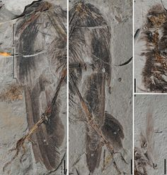 Remains of oldest known relative of modern birds discovered in China