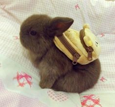 Baby bunny with a backpack. OMGosh!!! Tooooooo cute!! I want it!
