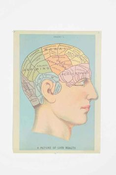 Phrenology Head Poster - Urban Outfitters