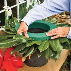 Make your own Wreath- LWCD-Steps to Making the Perfect Wreath - How To Make a Magnolia Wreath - Southern Living