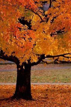 Orange Autumn Leaves #orange #autumn #leaves