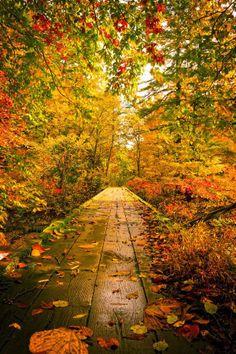 Warm Autumn Path - Yuzawa, Akita, Japan