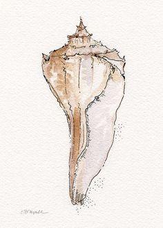 Whelk Conch Shell Watercolor Illustration by Erica Dale Strzepek