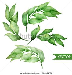 Vector hand drawn watercolor bay leaves set.