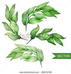 Vector hand drawn watercolor bay leaves set.