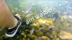 am wasser..... Fly Fishing, Sprouts, Vegetables, Water, Veggies, Vegetable Recipes, Fly Tying, Brussels Sprouts, Kale