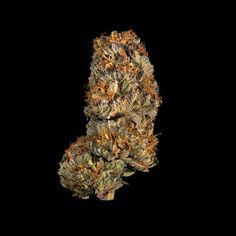 Hemp CBD Template - 1 - cannabis #hemp #hempoil #hempcbd #cannabis #cannabisoil