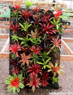 Cryptanthus – My Latest Plant Crush