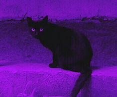 Imagem de purple, cat, and aesthetic Dark Purple Aesthetic, Violet Aesthetic, Lavender Aesthetic, Witch Aesthetic, Aesthetic Colors, Aesthetic Images, Aesthetic Collage, Aesthetic Backgrounds, Aesthetic Galaxy