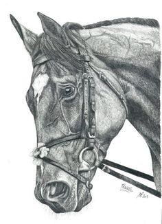 Frankel by Faith Bailey Horse Pencil Drawing, Horse Drawings, Animal Drawings, Art Drawings, Horse Artwork, Cool Artwork, Animal Sketches, Art Sketches, Zebras
