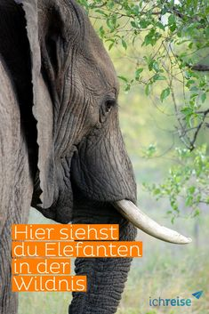 Africa has a safari for every traveller - what will your trip tale be? African safari deals and excursions range from pail-check-list routines to extra-higher-type Grey Elephant, African Elephant, African Animals, African Safari, Elephant Diet, Elephant Quotes, Elephant Facts, Kenya Travel, Africa Travel