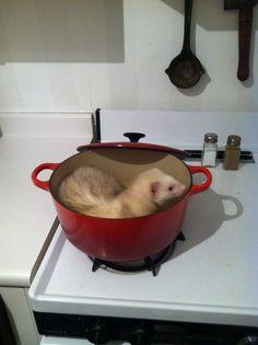 It's a ferret in a pan!