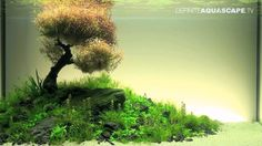 Aquascaping - The Art of the Planted Aquarium 2012 XL compilation
