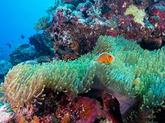 Although the largest living thing on Earth can be seen from space, the best vantage point belongs to the avid snorkelers and scuba divers who visit each year.