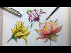 How to Draw & Paint Flowers with Ink and Watercolor Part 2 - YouTube