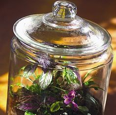Rainforest… in a Jar! {a fun way to keep a little bit of the garden... inside!} #gardening #jars