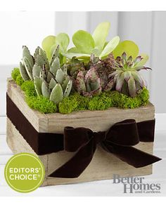 FTD The FTD® Succulent Dishgarden by Better Homes and Gardens® from FTD   BHG.com Shop