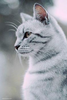 Pearlshine~friendly, calm she cat very motherly, mate~Blackshell…