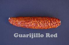 Guarijio Red