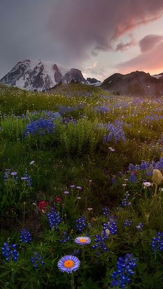 Best dream destinations to travel to John Cho, Bird Tree, Mount Rainier, Mother Nature, Paradise, Birds, Fantasy, Explore, Mountains