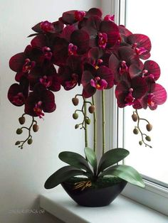 Real Touch Orchid - home decor plants - Orchideen Unusual Flowers, Amazing Flowers, Beautiful Roses, Beautiful Flowers, Unusual Plants, Orchids Garden, Orchid Plants, Orchid Flowers, Flowers Garden