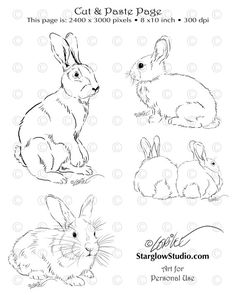 4 Bunny Rabbit Drawings / Sketches Clip Art DIY by StarglowStudio