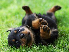 Looks like my new puppie 'Daisy'!